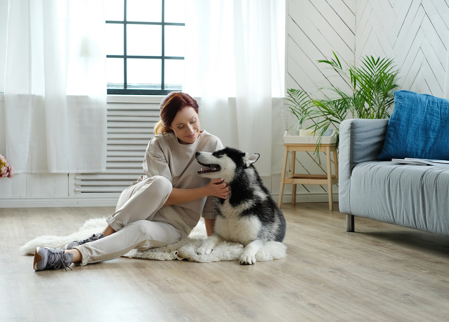 Pet Policy For Rental Property